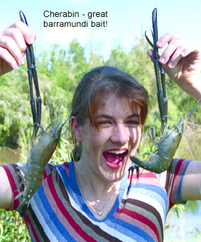 cherabin for barramundi fishing
